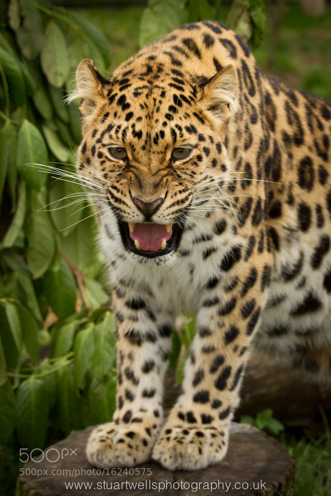 Photograph Snarl by Stuart Wells on 500px