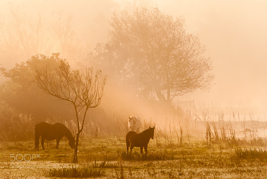 Photograph Morning mist by Youcef Bendraou on 500px