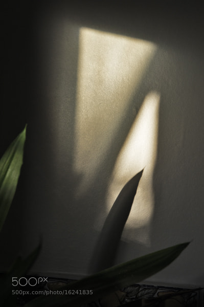 Photograph Shadow View by Frank Lock on 500px