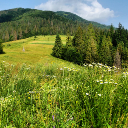 Summer, Ukraine, Karpaty, Mountains, Fujifilm FinePix AX500