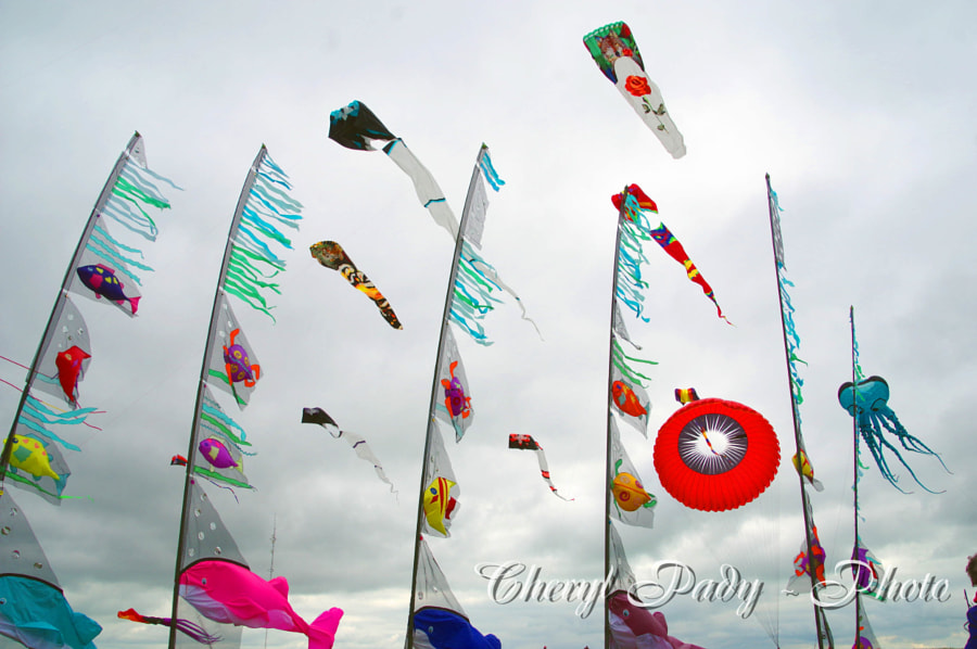 KiteFestival by Cheryl Pady on 500px.com