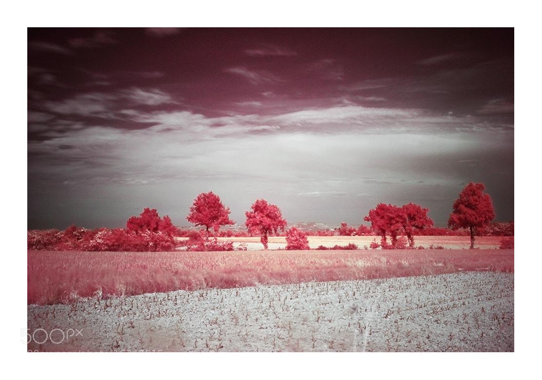Photograph Spirit Day by Francesca Botta on 500px