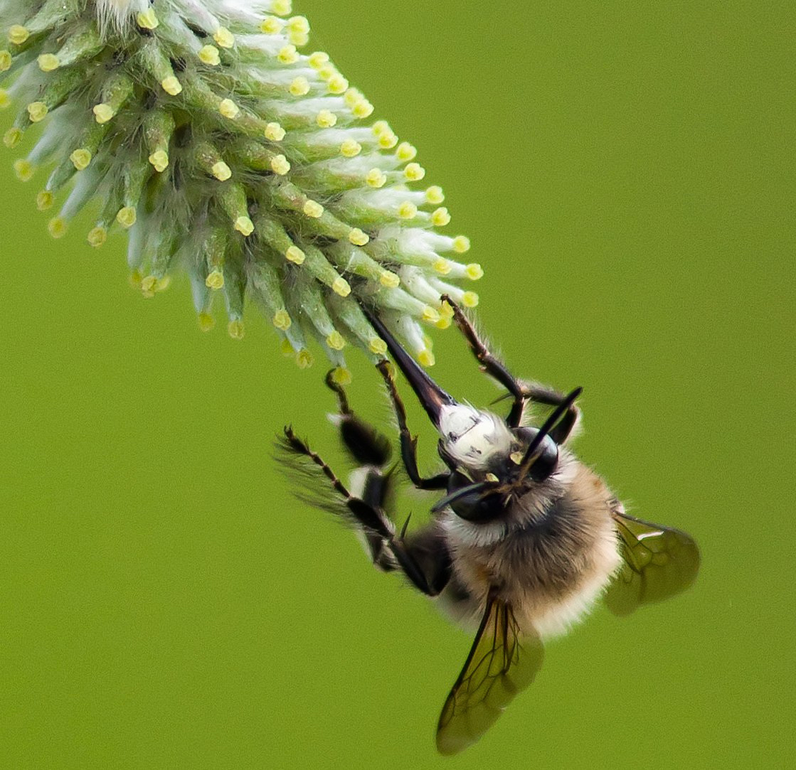 Photograph Bee by Martynas Ambrazas on 500px