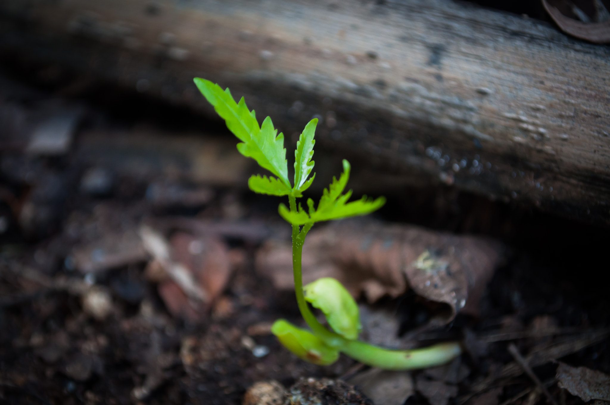 Photograph Seedling by Gopal Veeranala on 500px