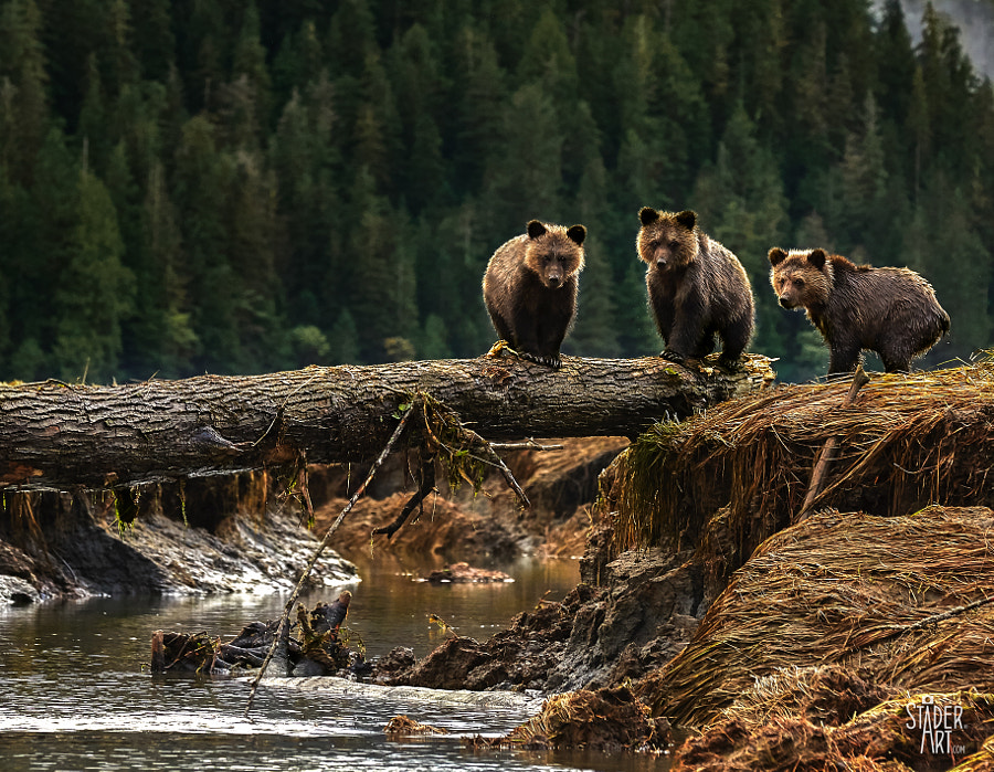 Three Rascals by Marcy Stader on 500px.com