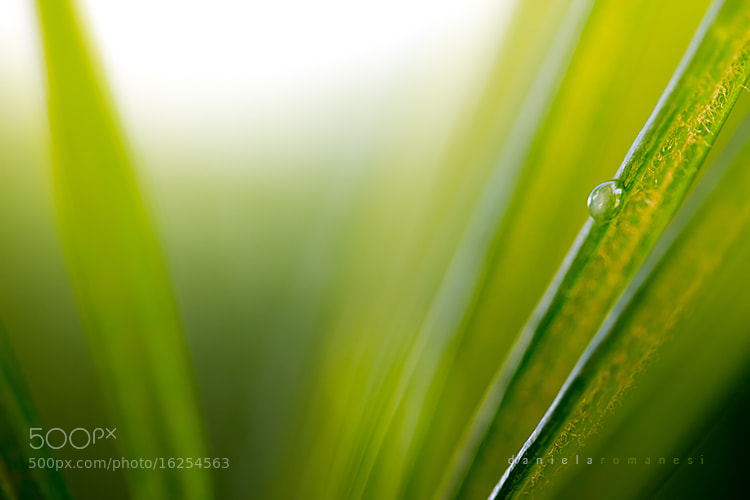 Photograph Green by Dani Romanesi on 500px