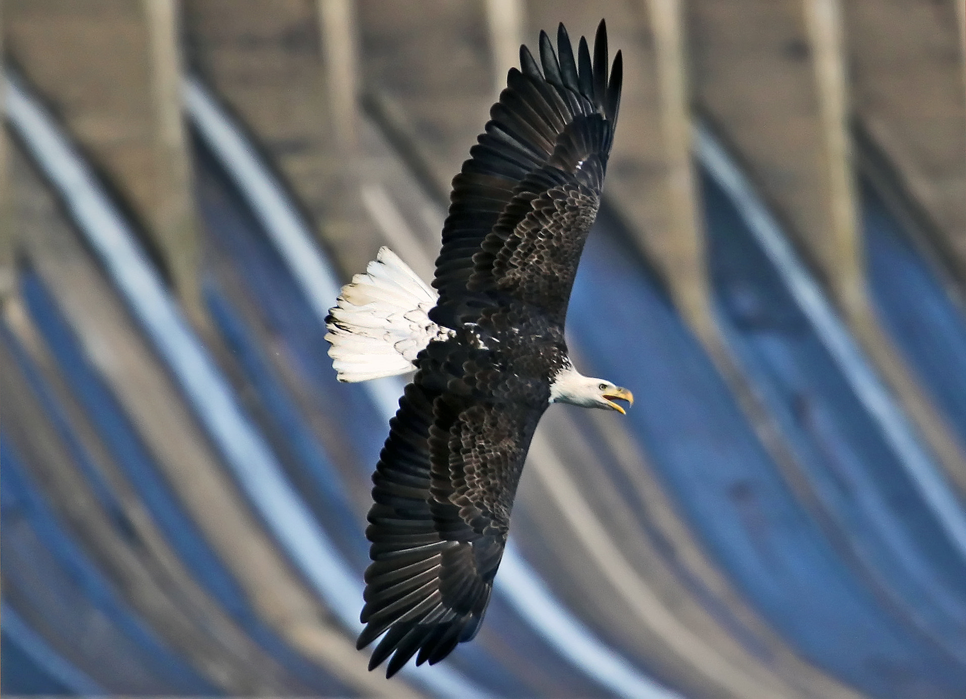 Photograph Dam Eagle by David F. Brown on 500px