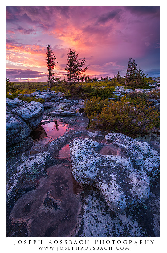 Photograph Amazing Light at Dolly Sods by Joseph Rossbach on 500px