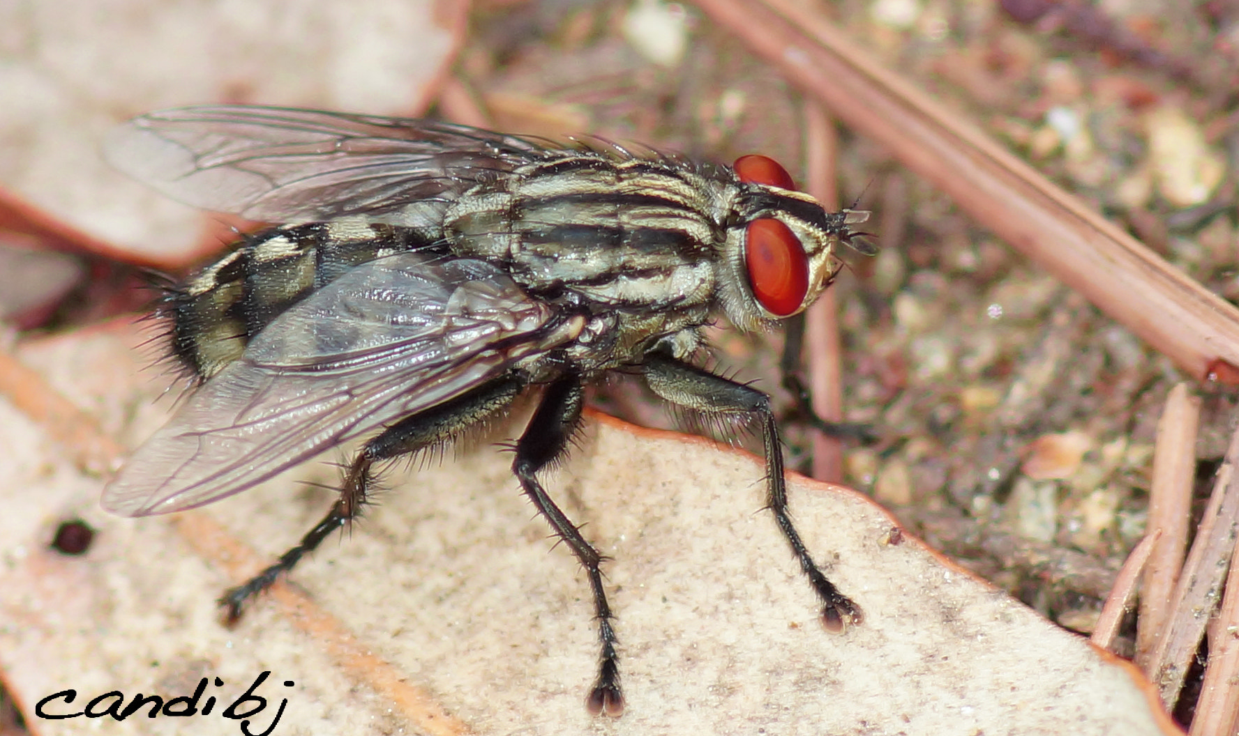 Photograph Mosca by Candido Bermudez on 500px