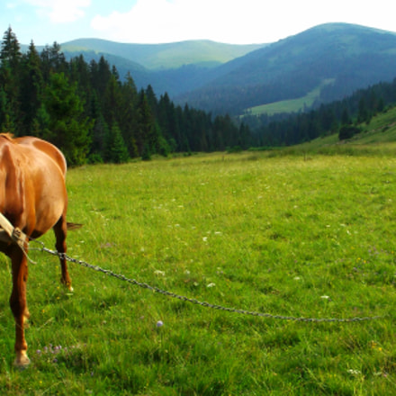 Ukraine, Carpathian Mountains, Pasture, Fujifilm FinePix AX500