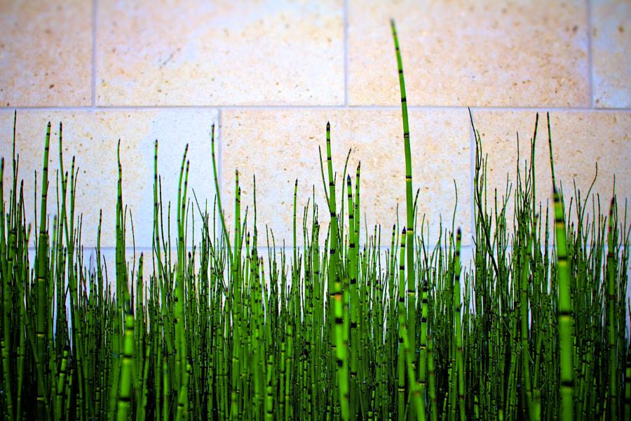 Baby Bamboo