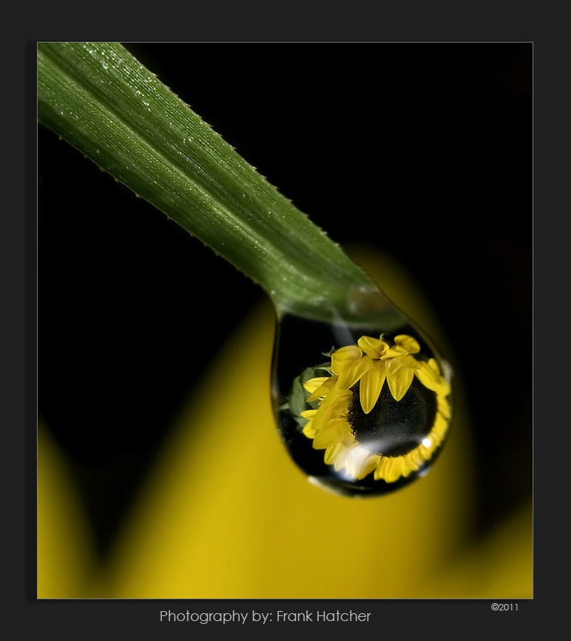 Photograph Water Drop by Frank Hatcher on 500px