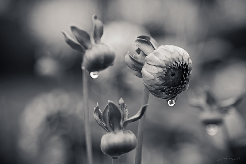 Photograph Flowers are crying too by Zdravko  Horvat on 500px