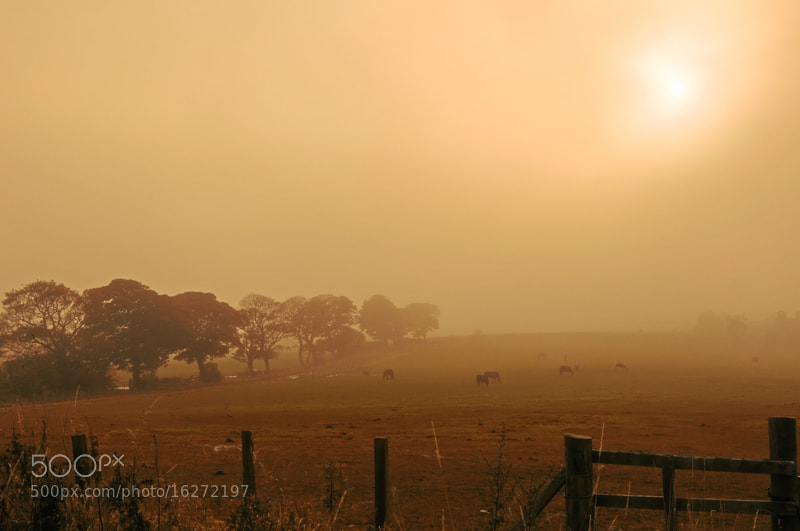 """Photograph """"Hazy Autumn Field"""" by Dave Christie on 500px"""
