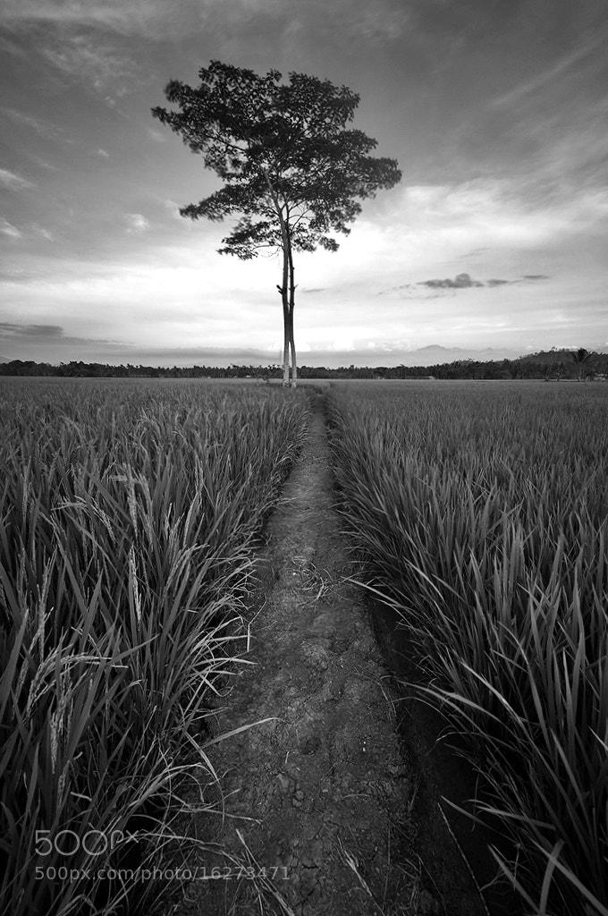 Photograph Guard of the harvest by Ledon Jasper Samoranos on 500px