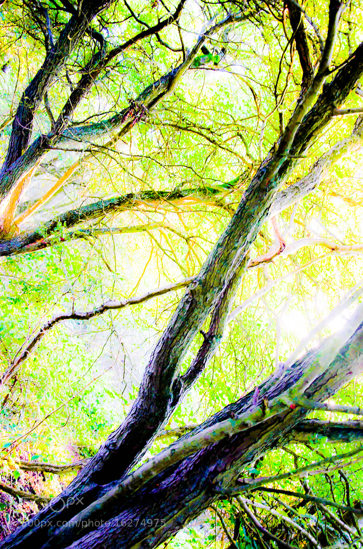 Photograph Wood 2 by julian john on 500px