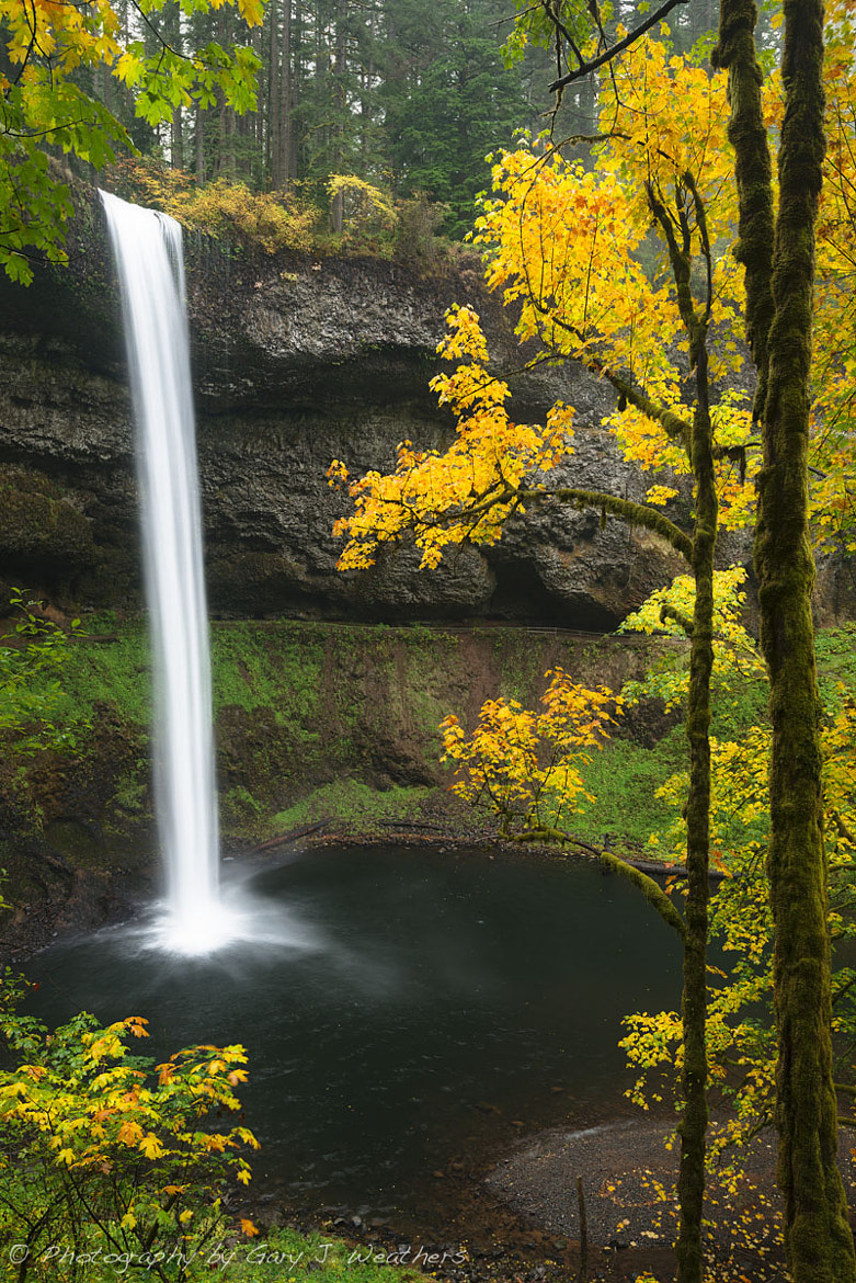 Photograph Soggy Color at Siver Falls State Park by Gary Weathers on 500px