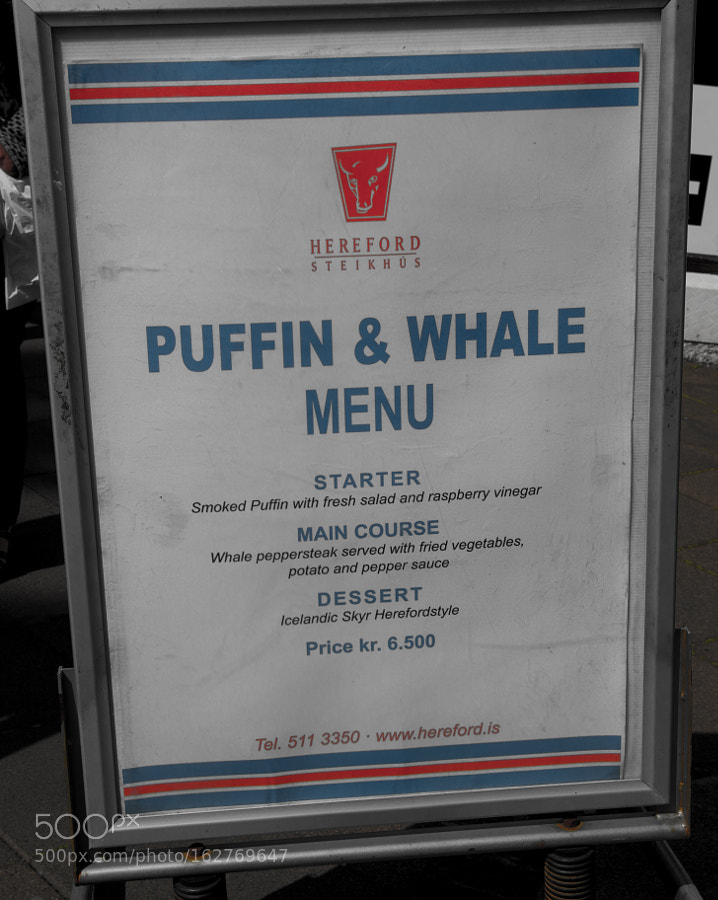 Menu offering Puffins and Whale for lunch - Tourists, stop eating this!