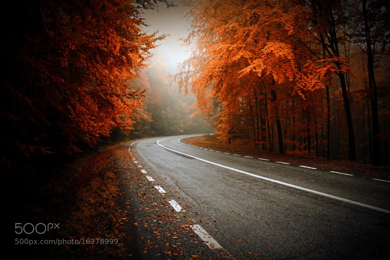 Photograph autumn way... by nicu hoandra on 500px