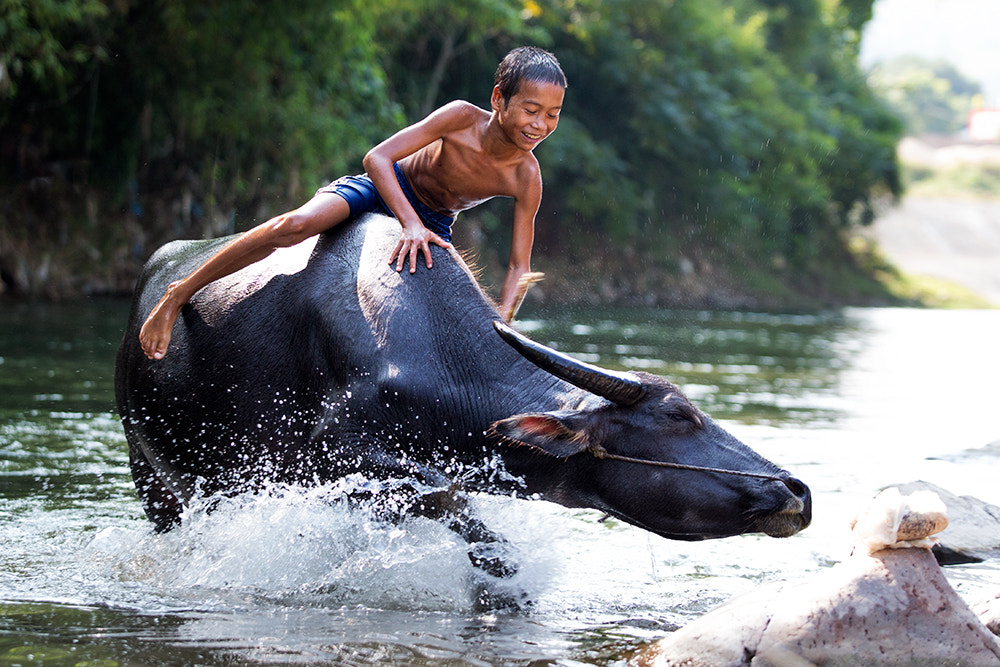 Photograph Buffalo Boy by Viet Hung on 500px