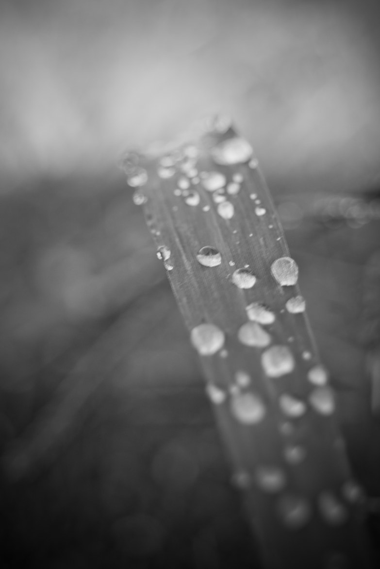 Photograph Morning Dew by Joe Andrews on 500px