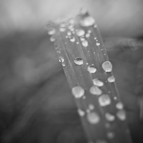Morning Dew by Joe Andrews (Thirty12)) on 500px.com
