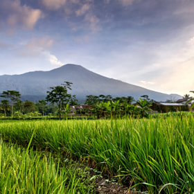 Mountain Seen from Rice fields