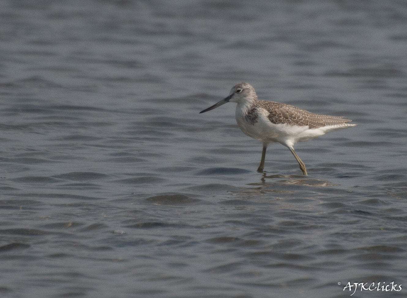 Photograph Common Sandpiper by AJK Clicks on 500px