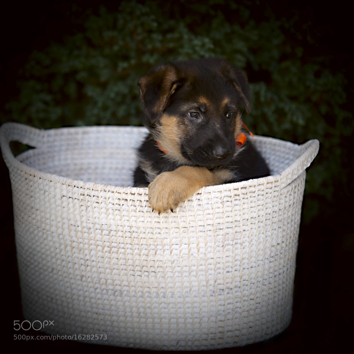 Photograph Alice ... in a basket by Игорь Гончаренко on 500px