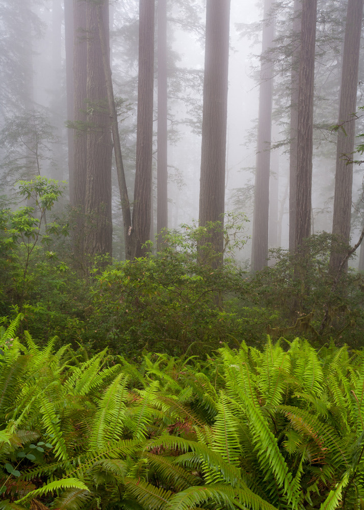 Photograph Lady Bird Redwoods by Lukas Wenger on 500px