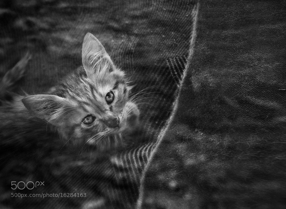 Photograph Cat's Life by Keren Segev on 500px