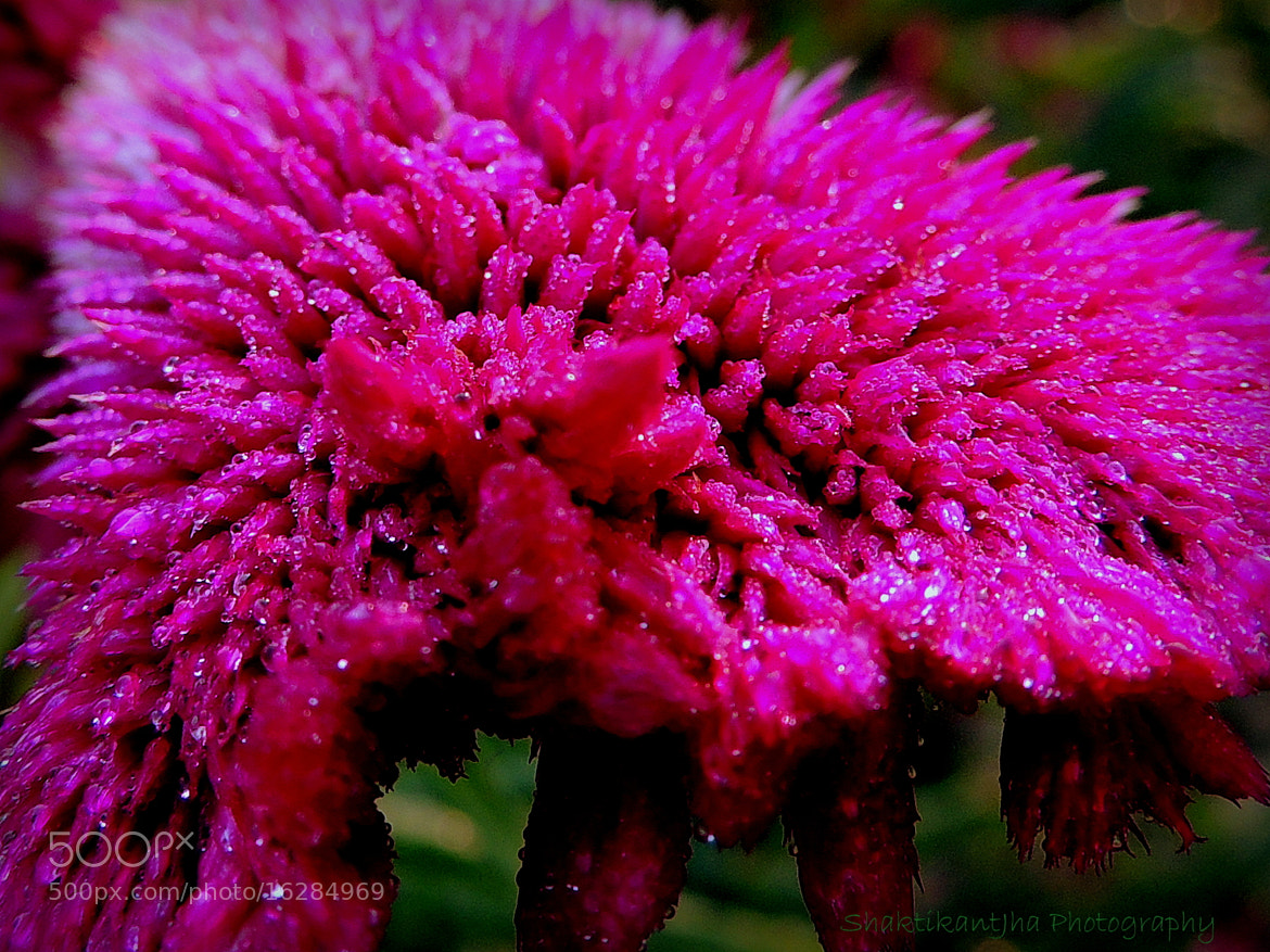 Photograph Morning Dew by Shaktikant Jha on 500px