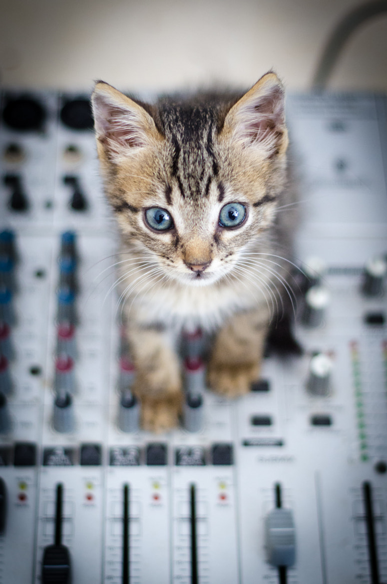 Photograph Peach, the sound engineer by Houssem Bensalem on 500px