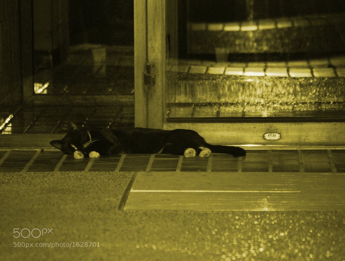 Photograph Kitty Guard by Cooksterz ^©^ on 500px