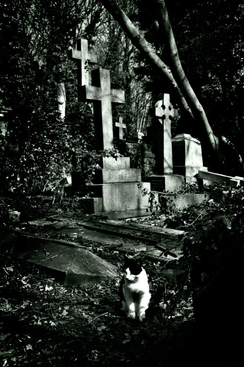 """Photograph """"Ferrycat"""" of souls by Gabriele Gaspardis on 500px"""