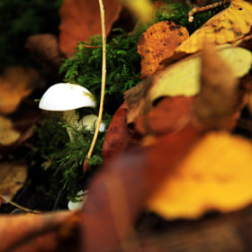 White mushroom by Max Wiedenmann (WiedenMax)) on 500px.com