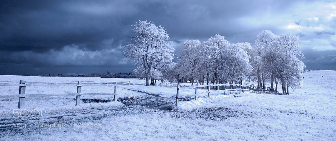 Photograph Town Moor Infra Red by Phil Whittaker on 500px