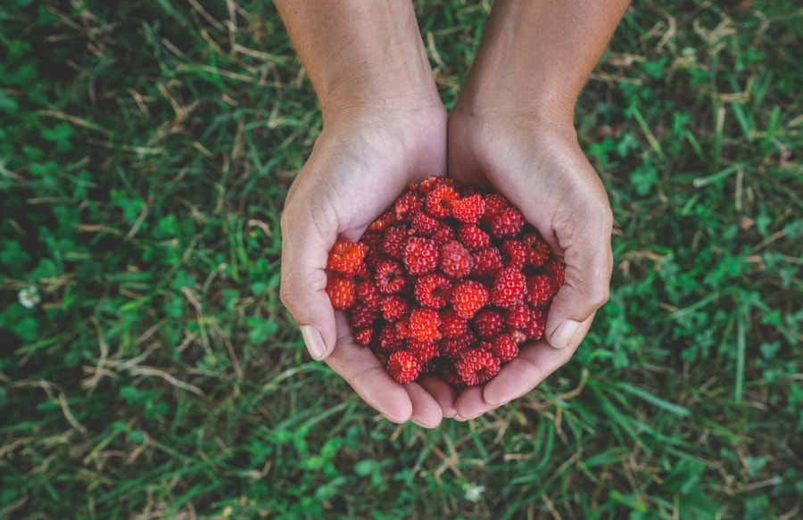 Hand Picked by Ash Simmons on 500px.com