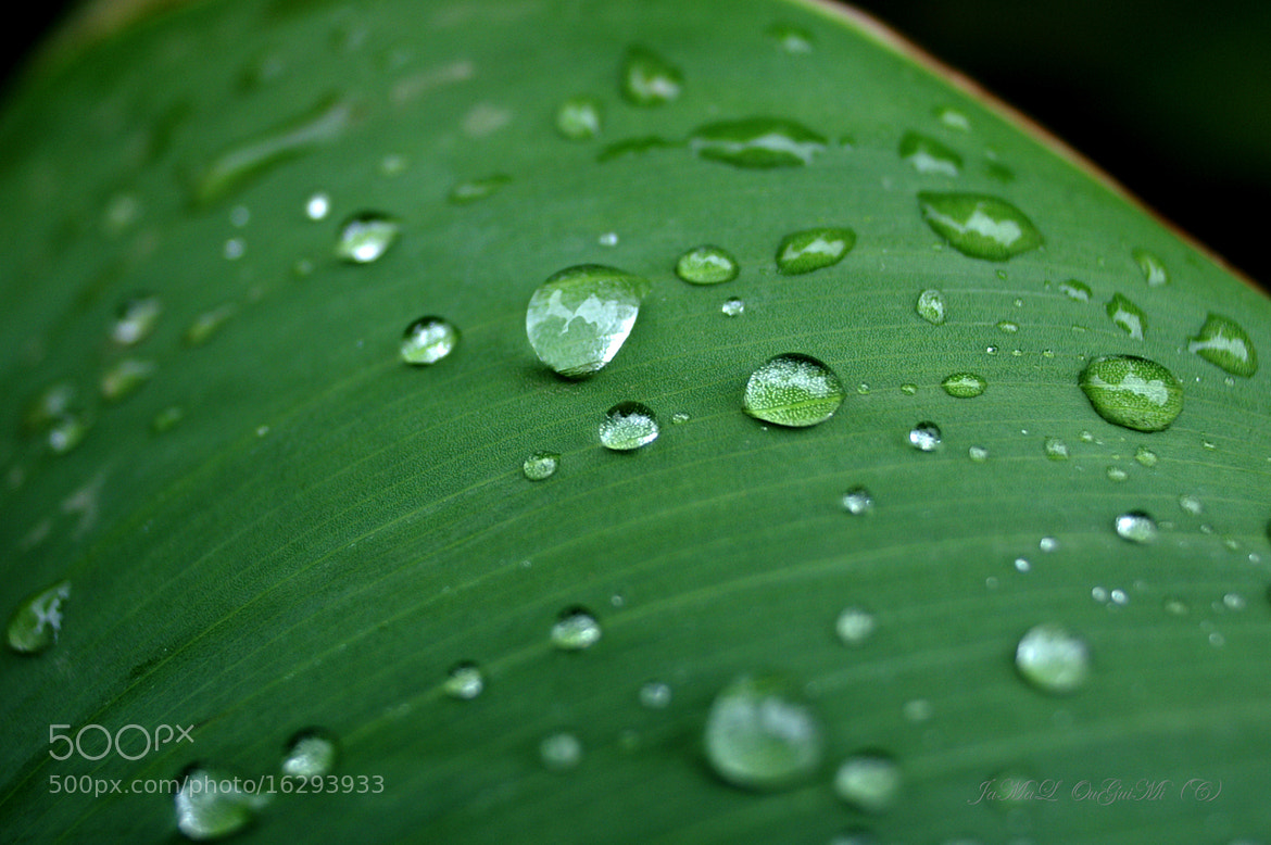 Photograph water drops by Jamal Ouguimi on 500px