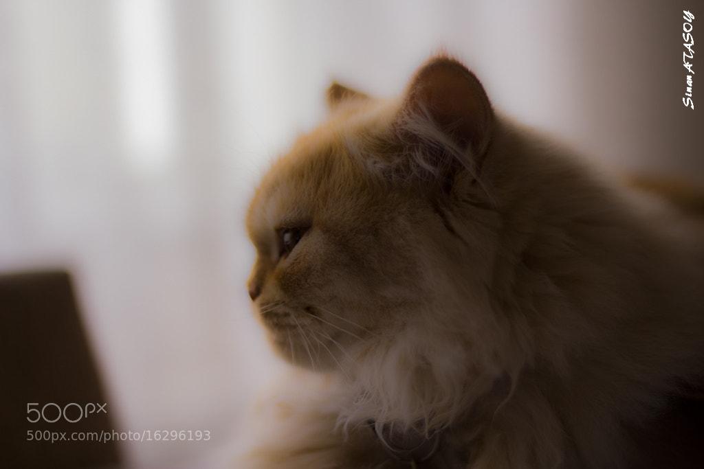 Photograph Simba by Sinan Atasoy on 500px