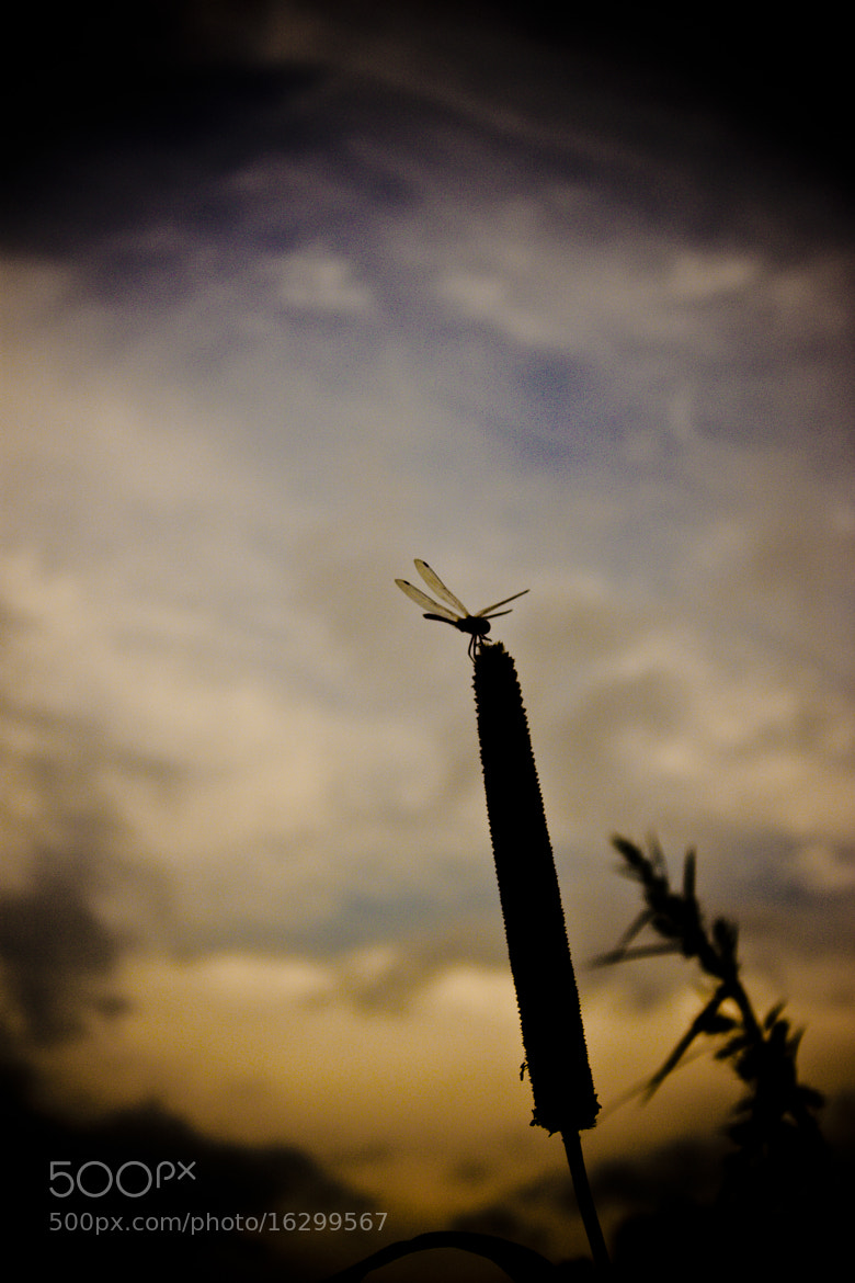 Photograph On your mark! get set! fly! by ARITRA SEN on 500px