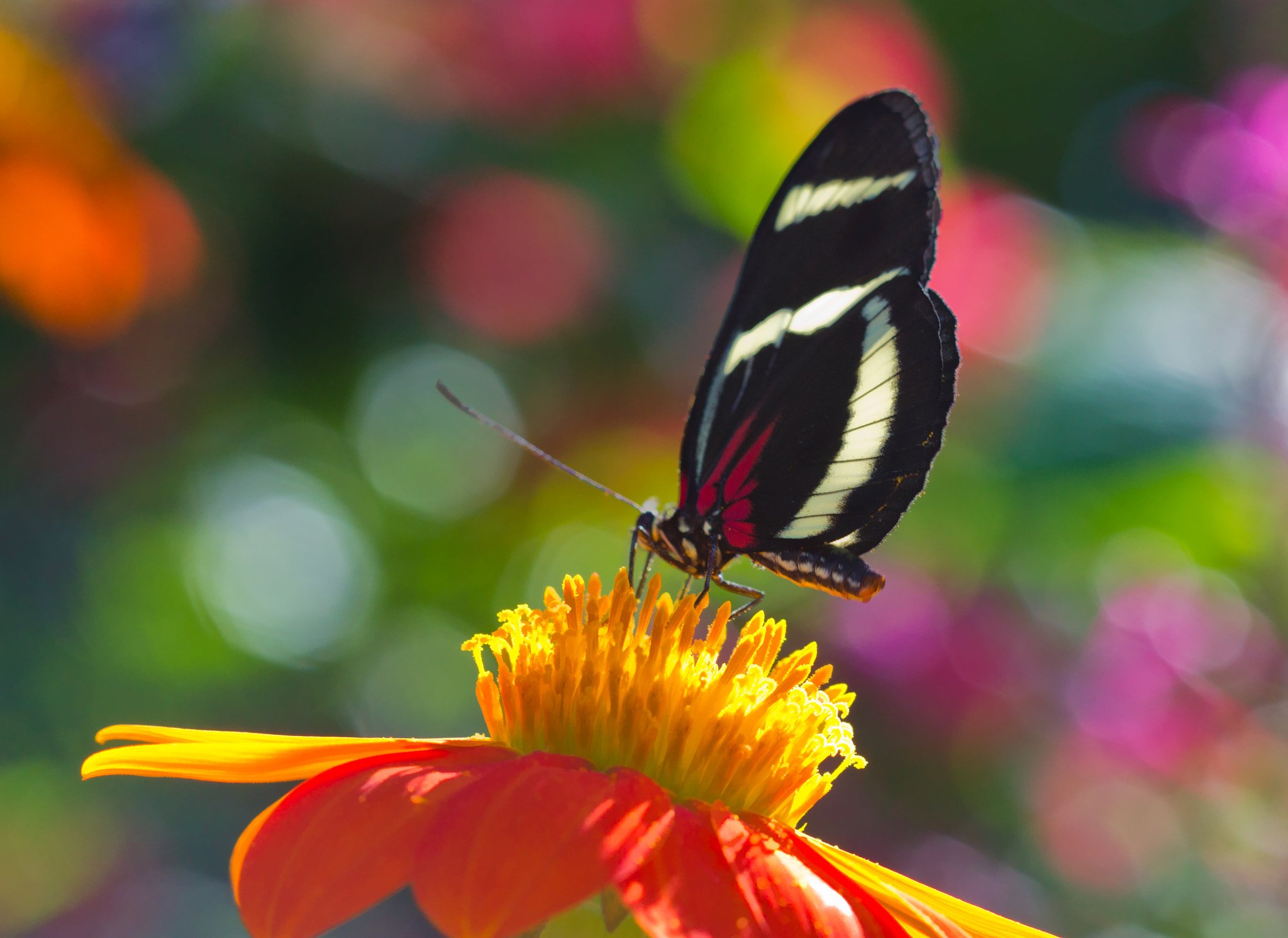 Photograph Butterfly Bokeh Explosion by Bob Decker on 500px