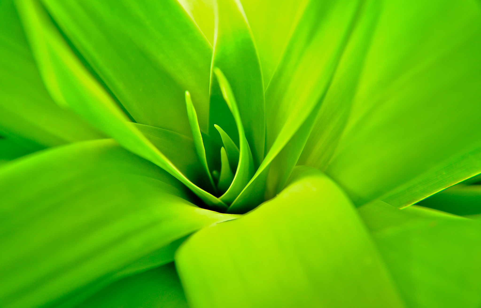 Photograph Green by Meddy Gunawan on 500px