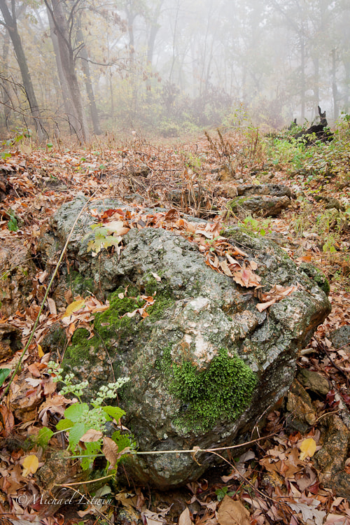 Photograph Mossy rock in fog by Michael Litwin on 500px