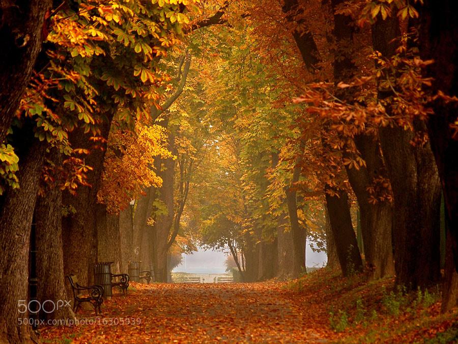 Photograph Autumn by Jasmina Gorjanski on 500px