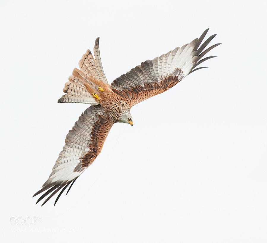 High key Kite by Geoffrey Baker (GeoffreyBaker)) on 500px.com