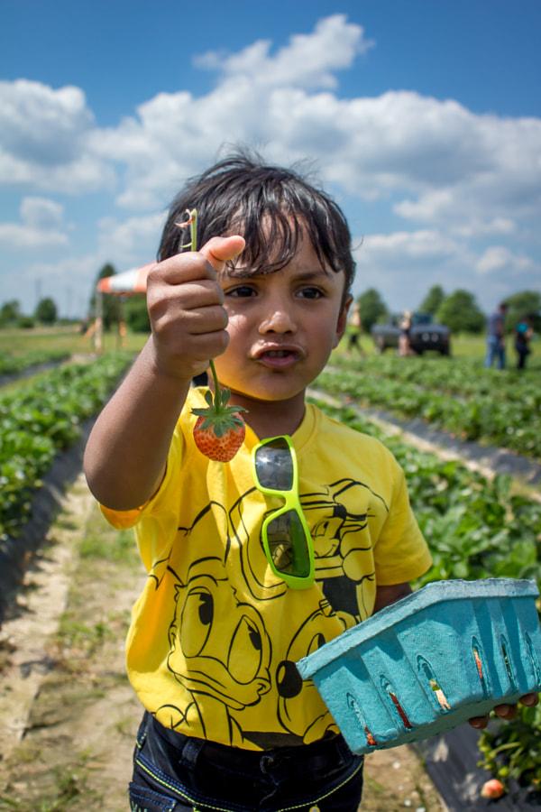 Farmer Boy picking Strawberries