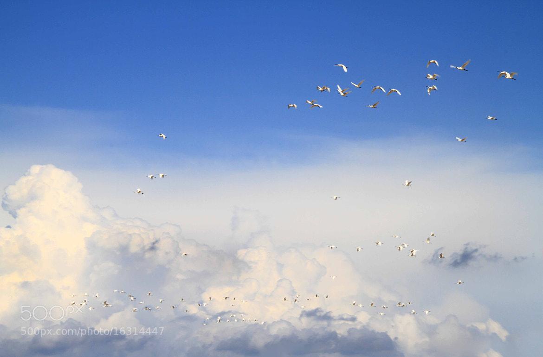 Photograph Liberi by Lorena La Rocca on 500px