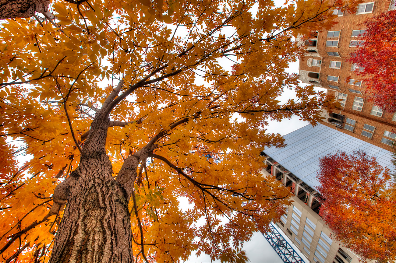 Photograph Fall Leaves and Construction by Eric  Bowers on 500px