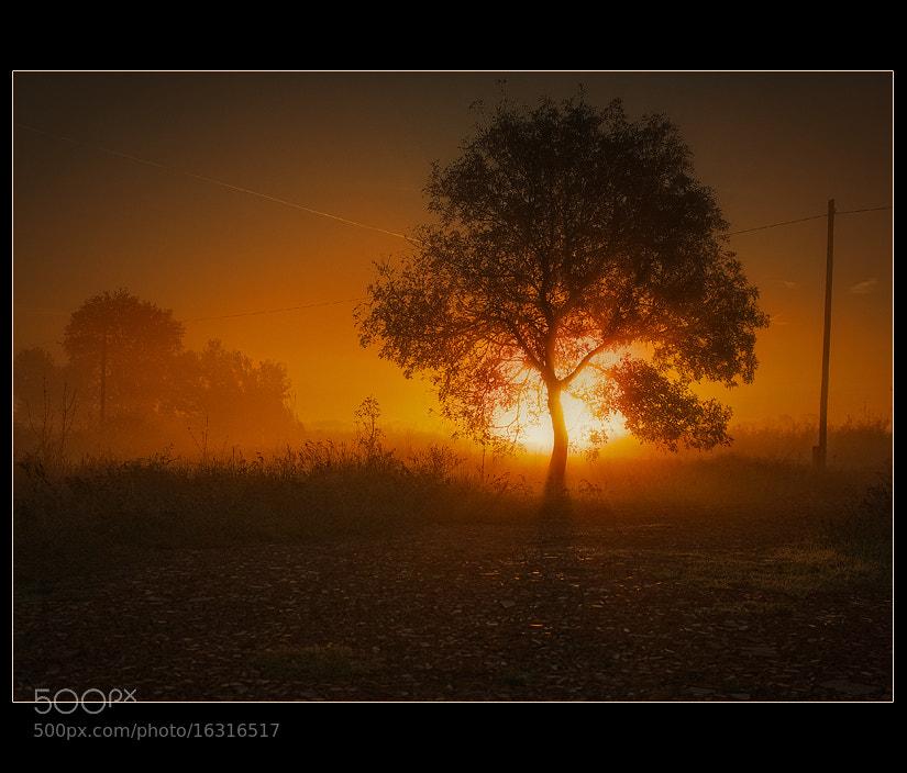 Photograph Morning glow by György Vrbovszki on 500px